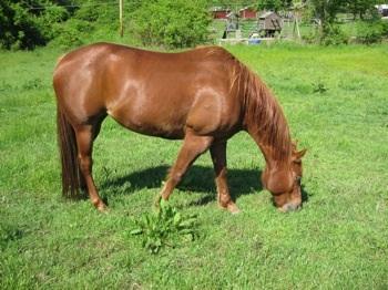 Female horse ass - photo#15